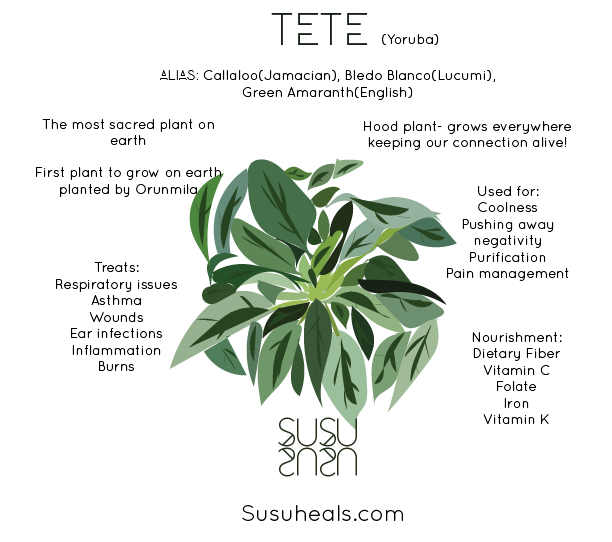 A graphic design from the Susu Healing Collective depicting the herb tete (green amaranth in English) with its history and uses.