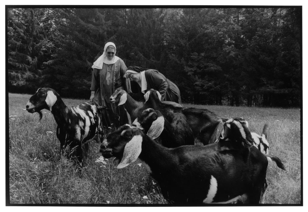 Two nuns mingle with goats in a field (black and white).