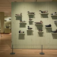 Birds of a Feather: Shelburne Museum's Decoy Collection