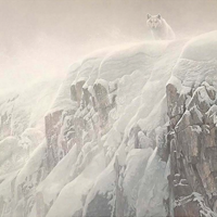 Online Art Auction—Robert Bateman hand-signed lithograph entitled Arctic Cliff—White Wolves