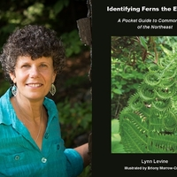 Naturalist Lynn Levine: Identifying Ferns the Easy Way