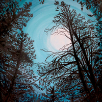 Calling From the Moonlight, a group exhibition