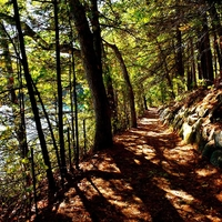 A Slight Sound at Evening: Why Thoreau's Quiet Writing Endures Today - CANCELED