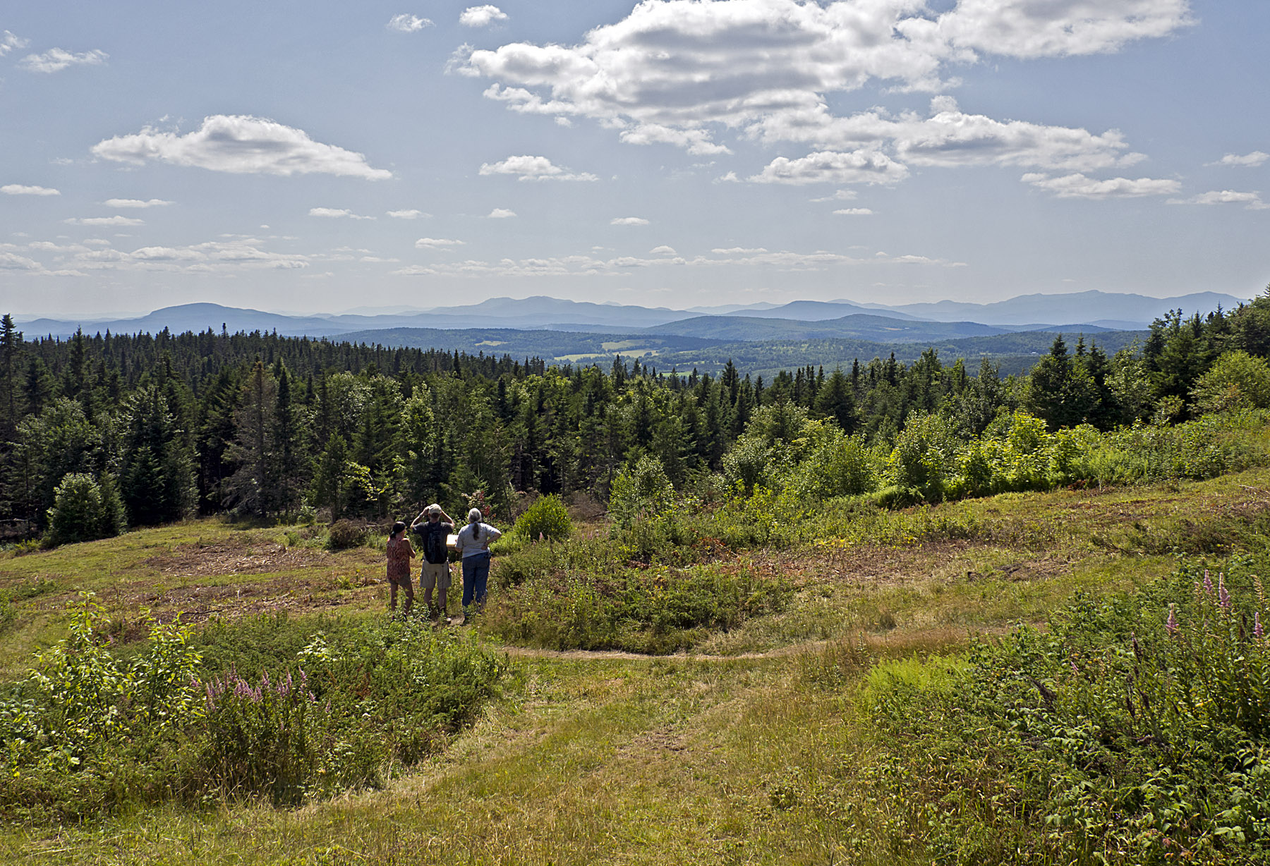 Barr Hill Natural Area in Greensboro